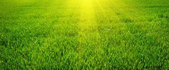 north texas grass